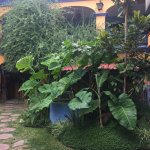 Foto de Azul Cielo Hostel