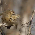 Squirrels at harmony