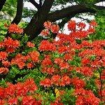 Zdjęcie Botanical Gardens (Botaniska Tradgarden)