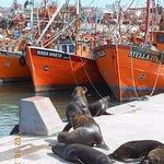 Barcazas y lobos marinos