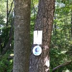 "The trail is marked by these 4"" diameter discs, often placed high in trees."