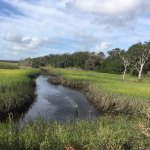 Egan's Creek attracts many species of herons, egrets and other sea birds
