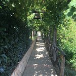 pathway through hotel property- fruit trees line the sides