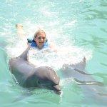 Foto de Dolphin Cove