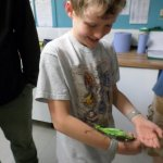 Close encounters of the stick insect kind!