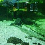Autres poissons tropicaux