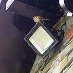 Inquisitive birds