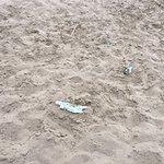 More dirty beach