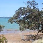 Pohutakawa trees line the Paihia beach front
