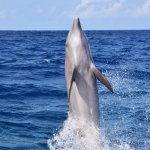 Foto de Dolphin Academy Curacao
