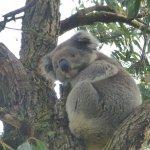 Our favorite Koala