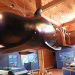 A fake whale