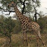 Billede af Rhino Post Safari Lodge