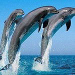 Whale waching- Mirrissa