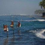 Stilt fishing-Midigama