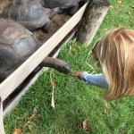 Meeting the giant tortoises
