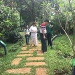 A Herbal Garden full of variety of medicinal plants