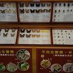 大廳有蝴蝶標本介紹