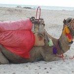 Photo of Seabel Aladin Djerba