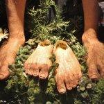 Hairy Hobbit Feet