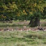 Part of the deer herd.
