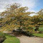Photo of Wells House & Gardens