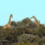 Sunset Safari Farm Tour