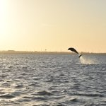 Dolphin at almost sunset