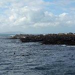 Photo of Dyer Island Cruises