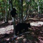 "Black Bear ""Sighting"""