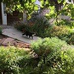 Friend in the garden