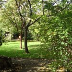 A delightful little garden with unusual and rare trees and shrubs