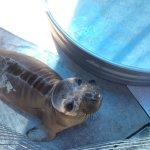 Foto de Pacific Marine Mammal Center