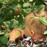 Super fun place to pick your own apples. We took our one year old and she was able to pick and e