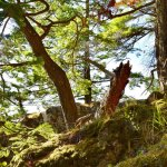 Beautiful colors, trees and mossy rocks on the Beacon rock trail.