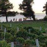 Neighborhood vineyard
