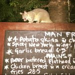 Possum on the menu.