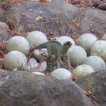 Maiasaura nest.