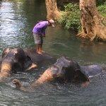 Photo de Nosey Parker's Elephant Camp - Private Day Tours