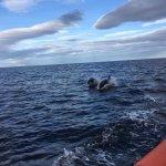Foto de North 58 Sea Adventures