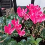 Flower in the balcony