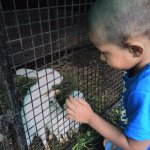 Rappa rabbits