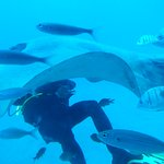 Diver with ray and fish