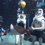 Shark Safari Experience