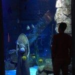 Photo de The Lost Chambers Aquarium