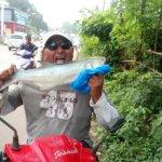Fresh sea salmon