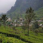 Tea pickers housing