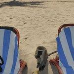 Foto de Amani Tiwi Beach Resort