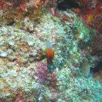 Photo de Piranha Divers Okinawa