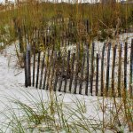 Fencing on the beach with the Sea Oats